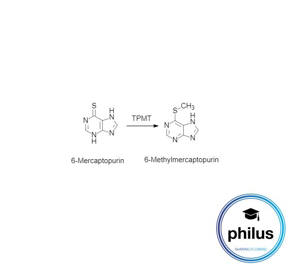 Umwandlung von 6-Mercaptopurin in 6-Methylmercaptopurin durch Thiopurinmethyltransferase