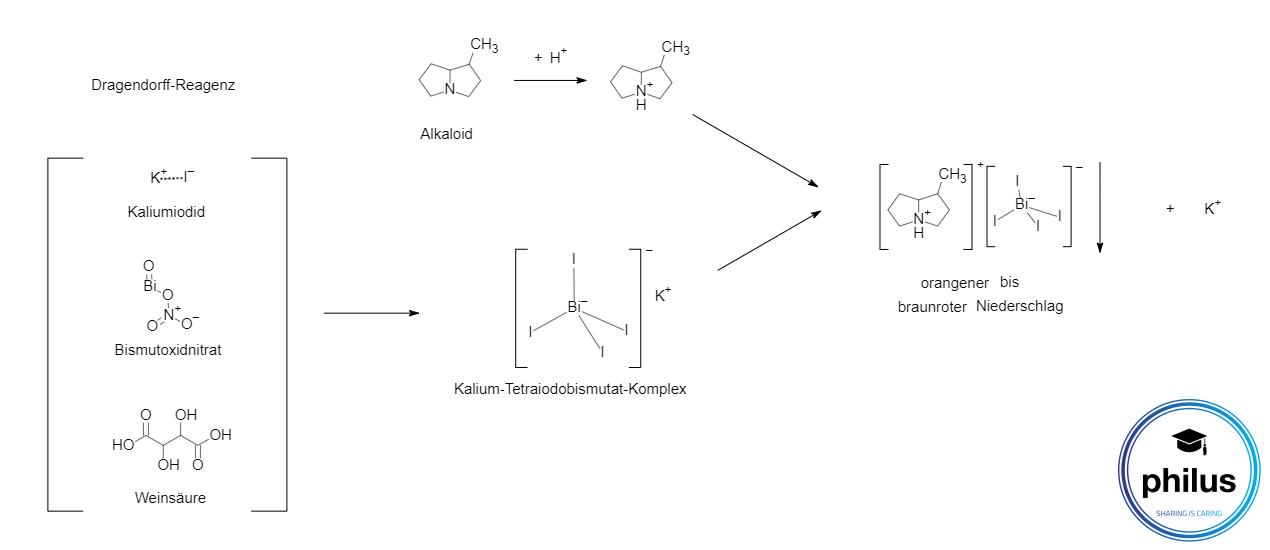 Allgemeiner Alkaloid-Nachweis mit Dragendorff-Reagenz