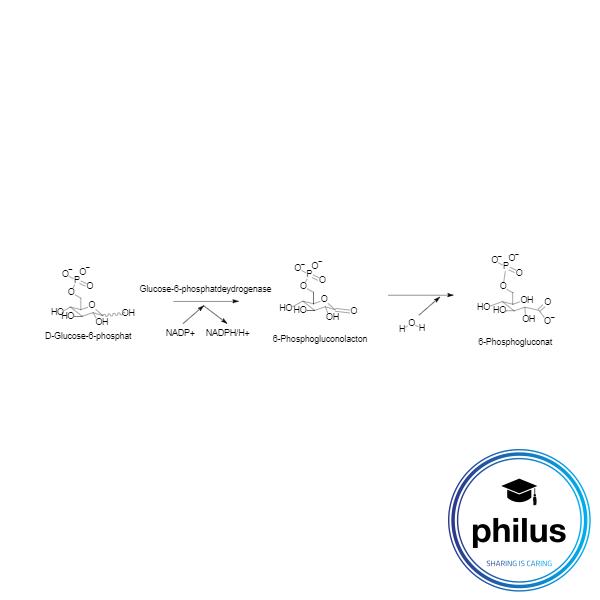 Glucose-6-phosphatdeydrogenase-Reaktion zur Bestimmung von Glucose