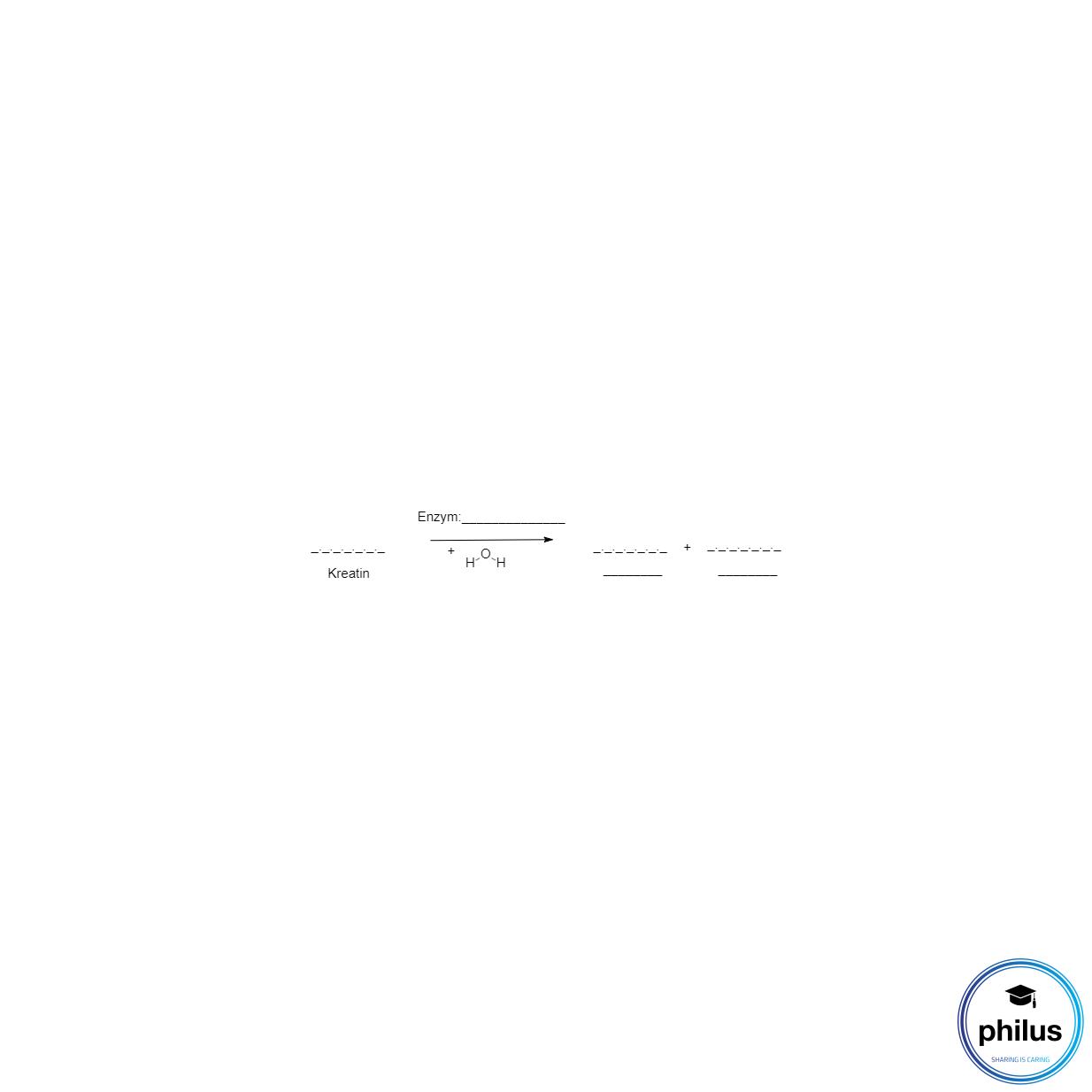 enzymatischer Kreatin-Abbau zu Sarkosin durch Kreatinase (Kreatinin-PAP-Farbtest) (unvollständig)