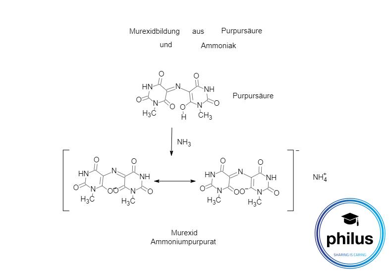 Murexidbildung aus Purpursäure und Ammoniak (Theobromin-Nachweis)