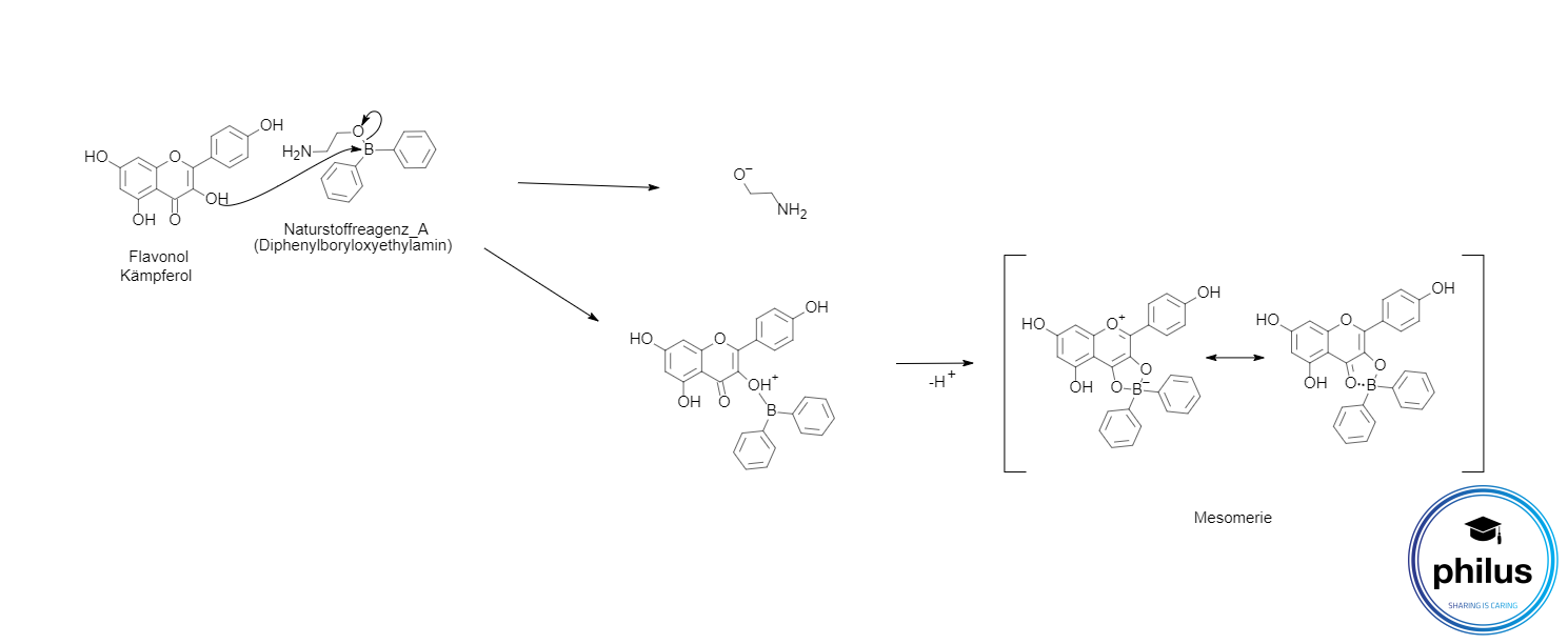 Reaktion von Flavonolen mit Naturstoffreagenz A (DC-Besprühung) am Beispiel von Kämpferol