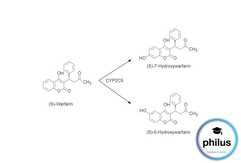 S-Warfarin-Metabolisierung durch CYP2C9