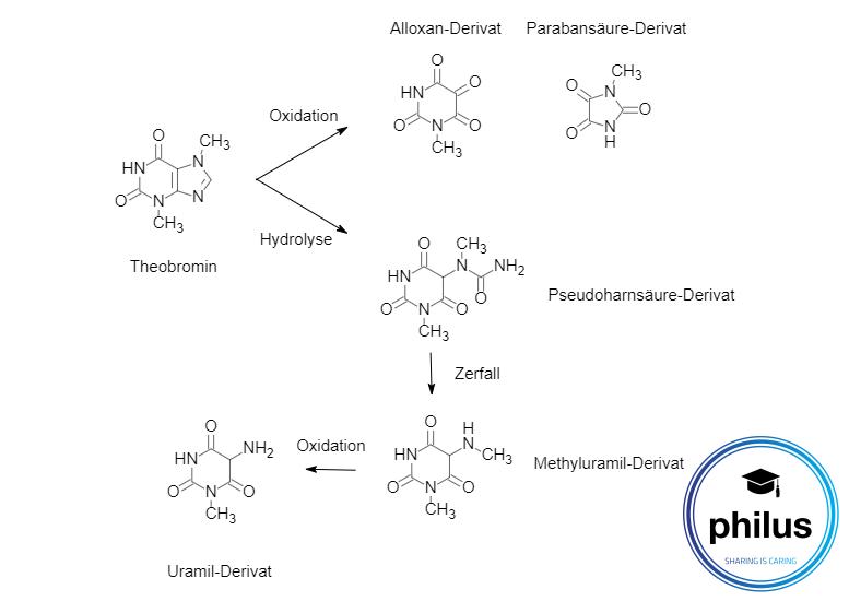 Theobromin-Nachweisdurch Murexid-Reaktion Teil 1, Oxidation und Hydrolyse