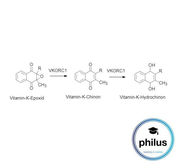 Vitamin-K-Metabolisierung durch VKORC1